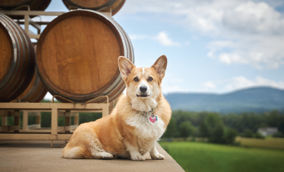 Winery-Dogs-TIREY
